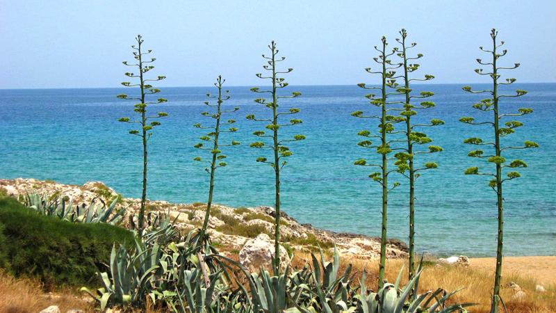 Sicilia Kyst på egen hånd